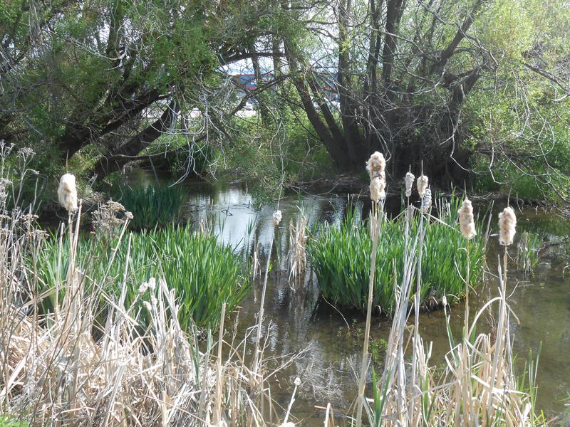 Riparian-habitat